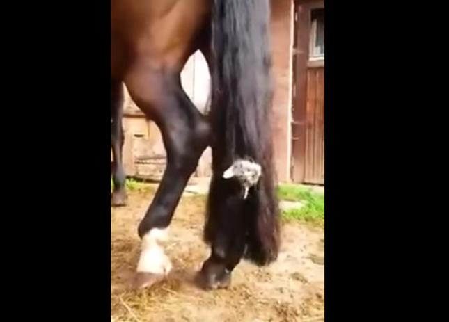 馬のしっぽで遊びまくり。