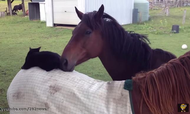 もう1頭の馬とも仲良し!