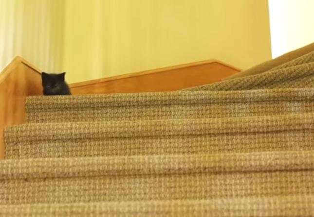 階段最高だーい!