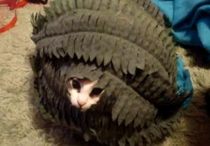 猫は隠れんぼの天才