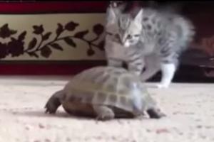 亀VS子猫