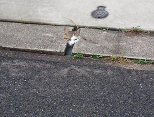 猫の監視員さんだ!