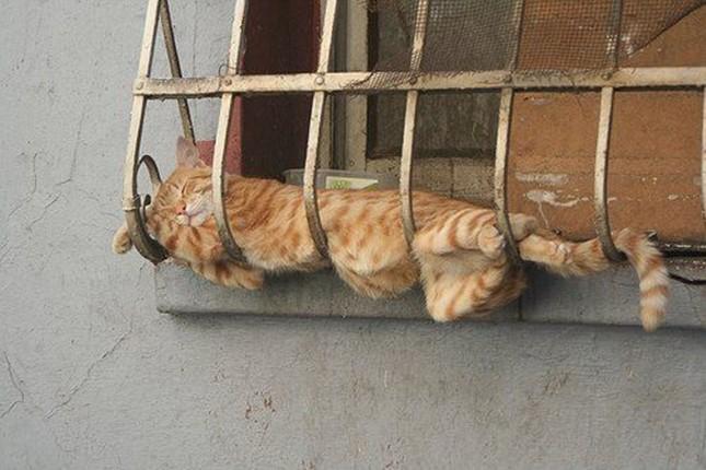 わざわざそこで寝なくても!
