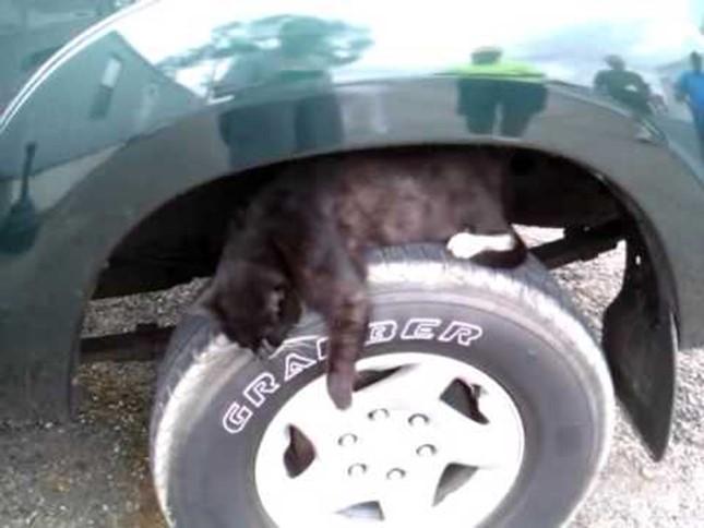 車のタイヤは絶対ダメ!