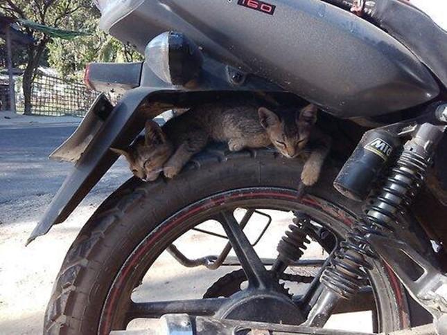 バイクでも、2匹で可愛くてもアカン!