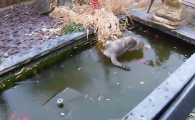 滑る池の表面に悪戦苦闘。