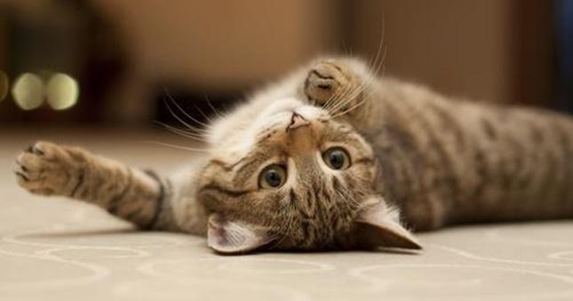 猫の愛情表現。