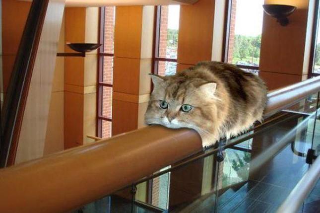 猫モノレール!