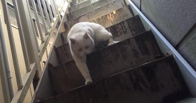 ムキムキホラー猫。
