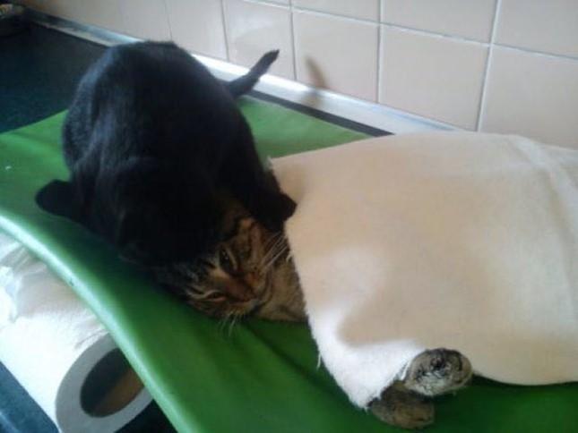 弱ってる猫の毛づくろい。