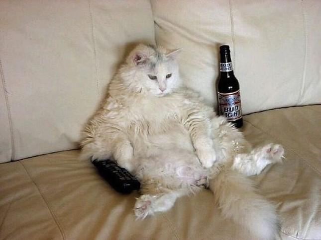 ビールにテレビが至福。