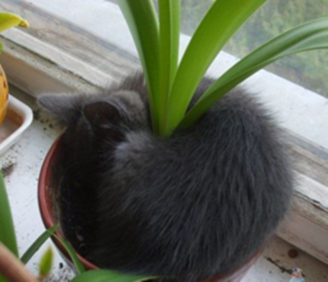 これがほんとの猫草。