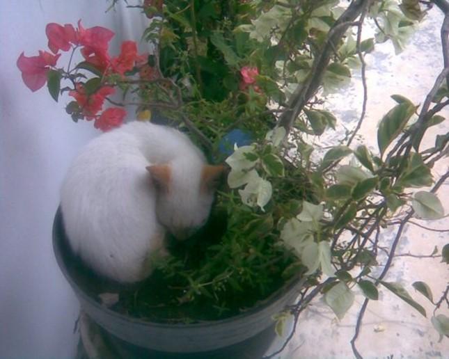 生け花!?