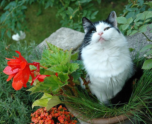 美しい一輪の猫!