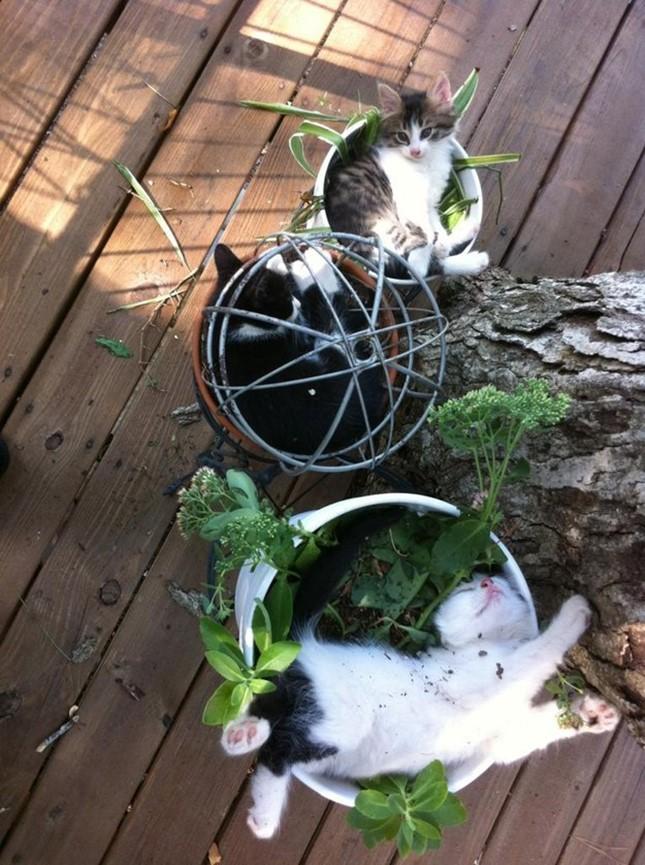 一人一植木鉢。
