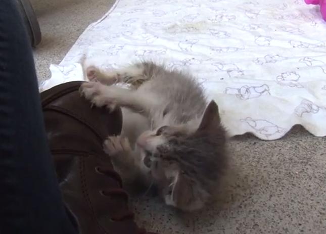 キュートな子猫。