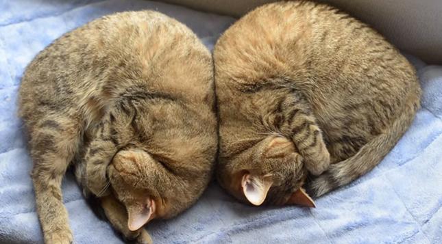 同じ寝相。