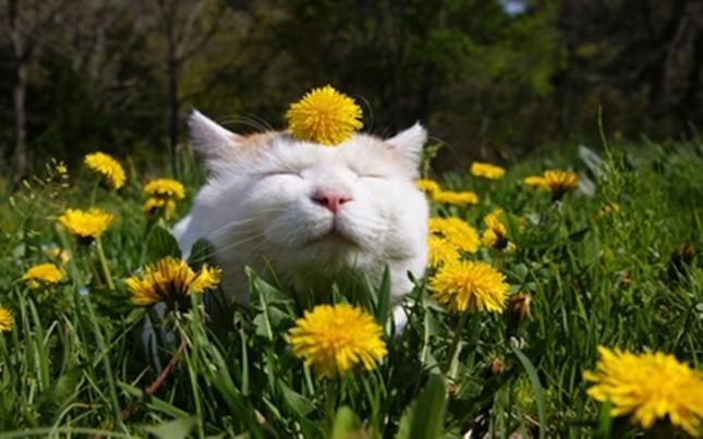 spring001cat