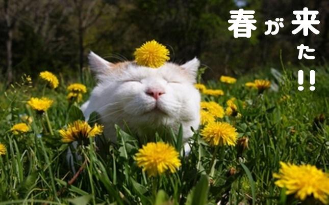 春が来た!猫も来た!