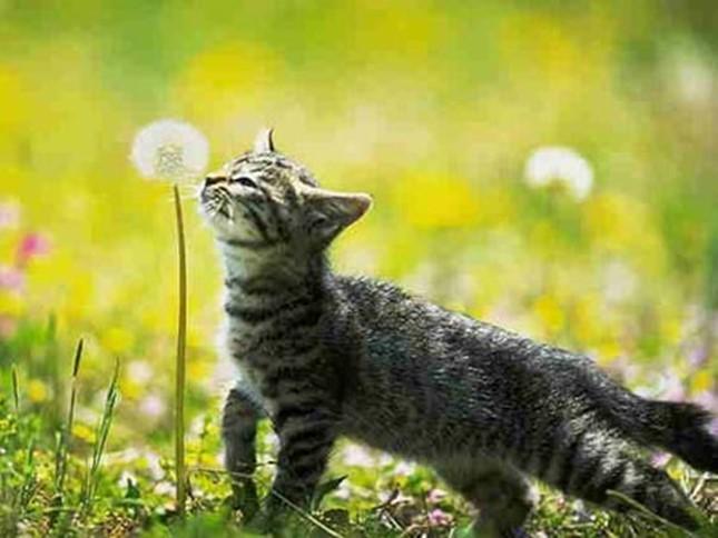 spring003cat
