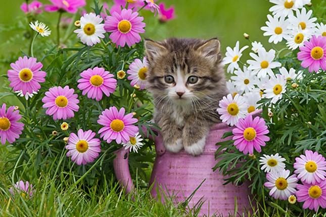 spring006cat