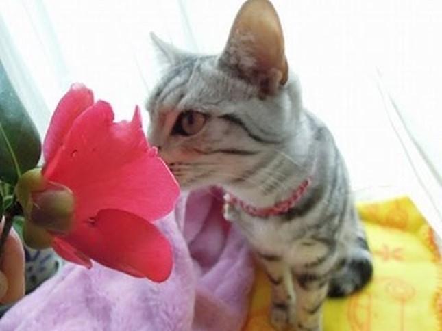 spring009cat