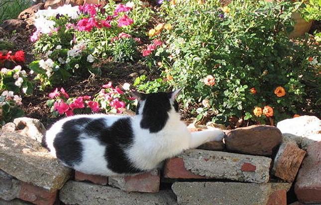 spring010cat