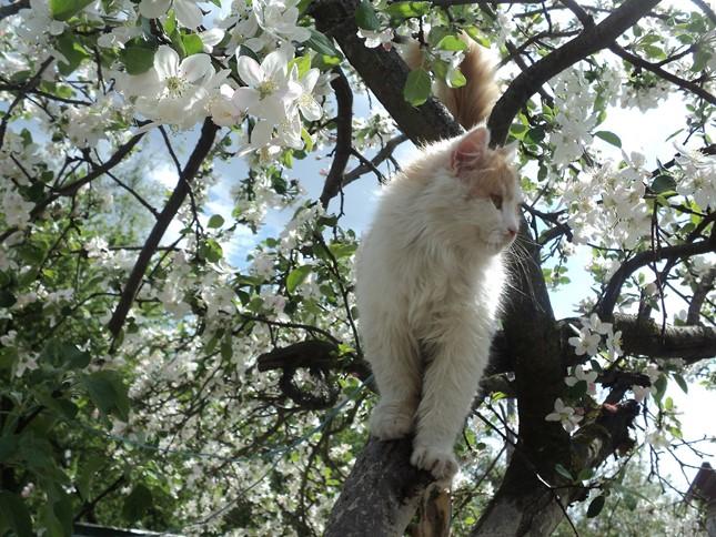 spring011cat