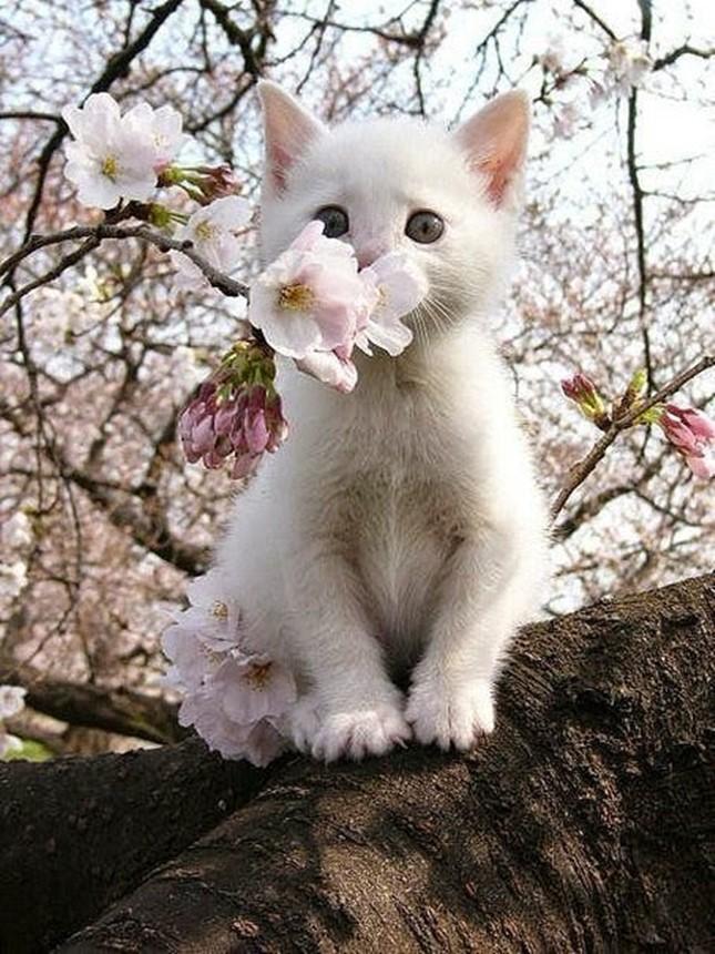 spring012cat