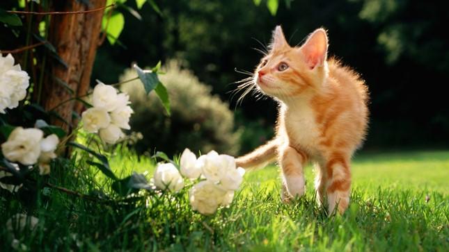 spring013cat