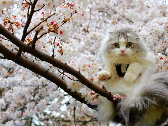 spring014cat