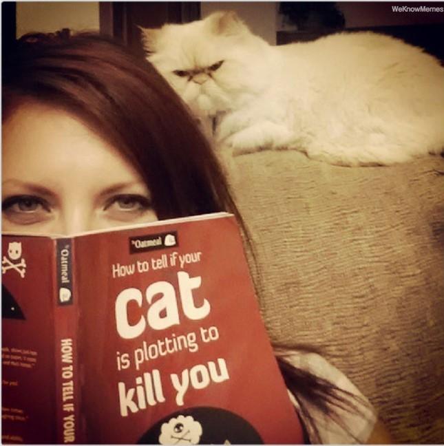 猫パンチ5秒前?