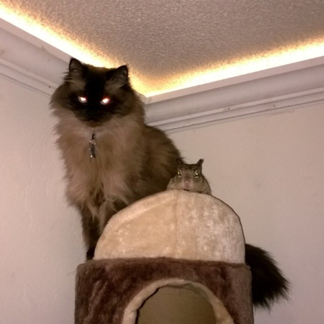 悪い猫と悪いリス。