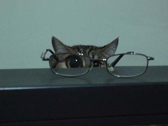 メガネを利用して見てきます。