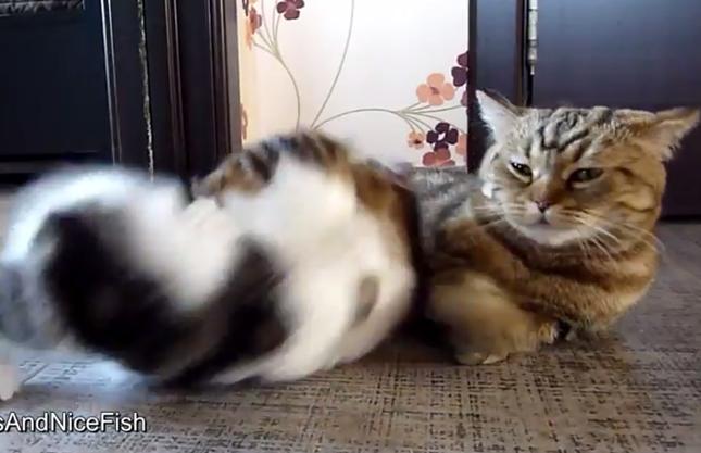 元気すぎて母猫びっくり!