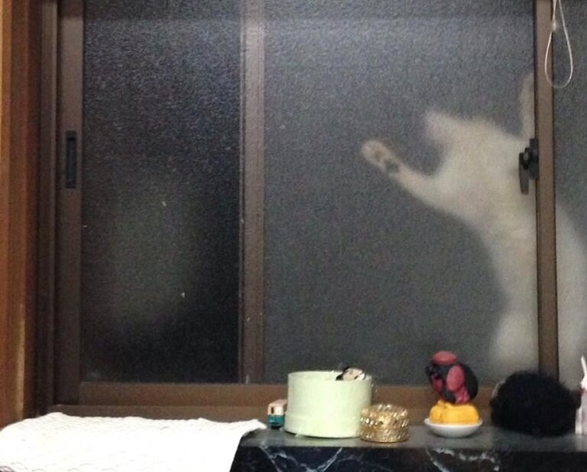 泥棒か?いや猫!