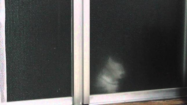 人影が・・いや猫影が!