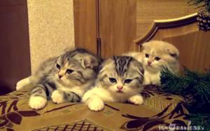 おネムな3匹の子猫たち。