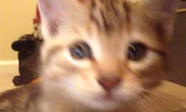 子猫パンチ炸裂!