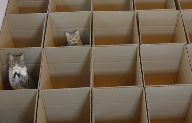 なぜかコネコネしてる猫さん。
