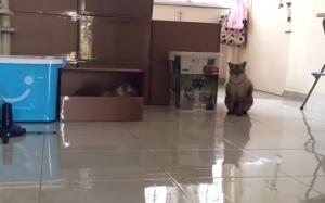箱の中で待ちぶせする猫。