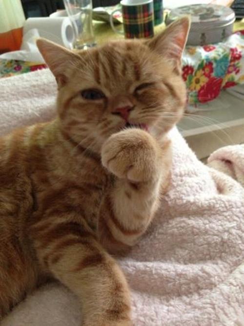 grooming016cat