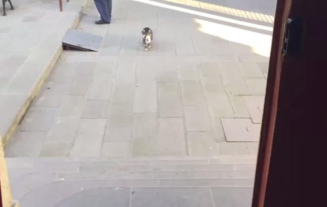 何かを咥えてる猫。