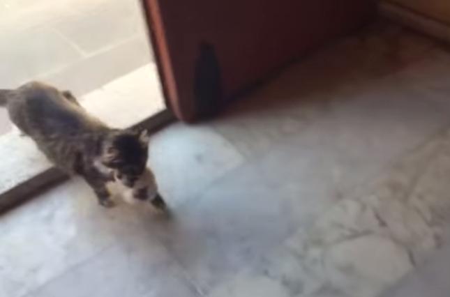 正体は家出してた子猫!