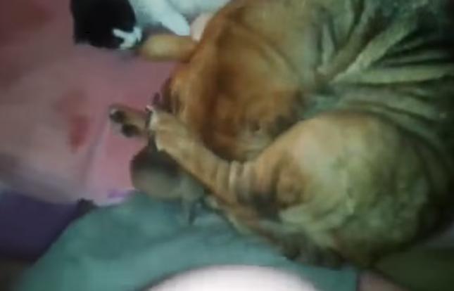 母犬さん頑張りました!