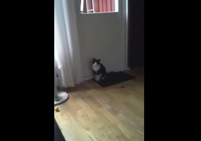 ドアを開けて欲しい猫。