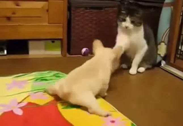 静かに強い猫センパイ。