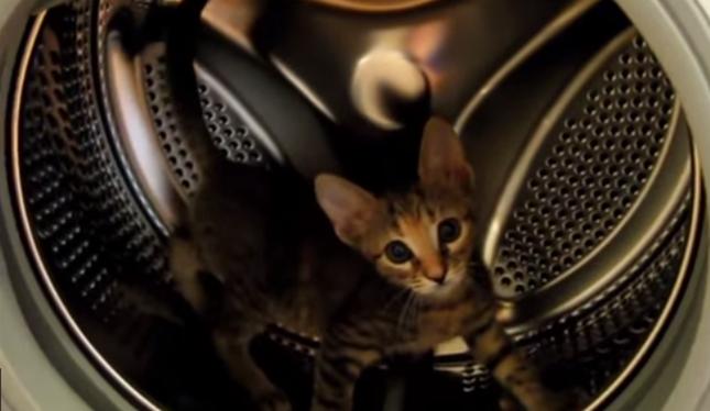 可愛らしい子猫。