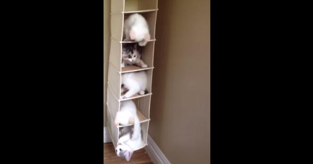 楽しそうな子猫たち。