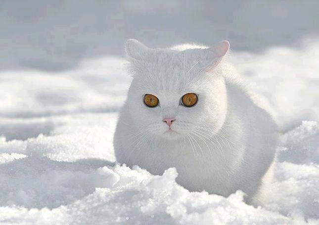 雪に溶け込むまんぞくさん。